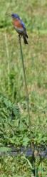 Blue Bird on a stick