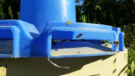 pollen feeder